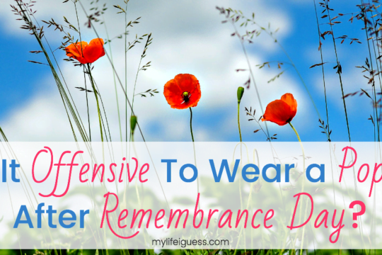 Is It Offensive to Wear a Poppy After Remembrance Day? - My Life, I Guess