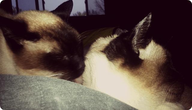adayintheunemployedlife-kittycuddles