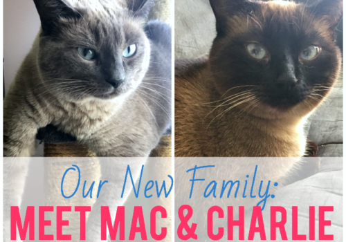Our New Family: Meet Mac and Charlie - My Life, I Guess