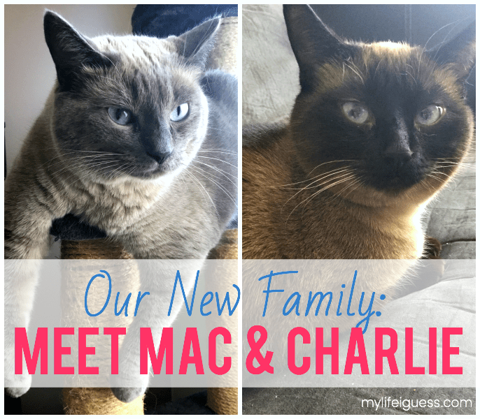 Or New Family: Meet Mac and Charlie - My Life, I Guess