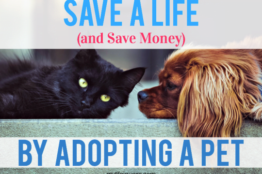 Save a Life (And Save Money) By Adopting a Pet - My Life, I Guess