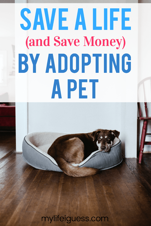 Adopting a pet into your family is a big commitment. But the rewards are so worth it! You Can Save a Life (And Save Money) By Adopting a Pet - My Life, I Guess  #pet #pets #adoption #adopting #petadoption #savealife #savemoney